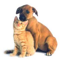 Best Premiums -ruokanäytteitä (koirille ja kissoille)